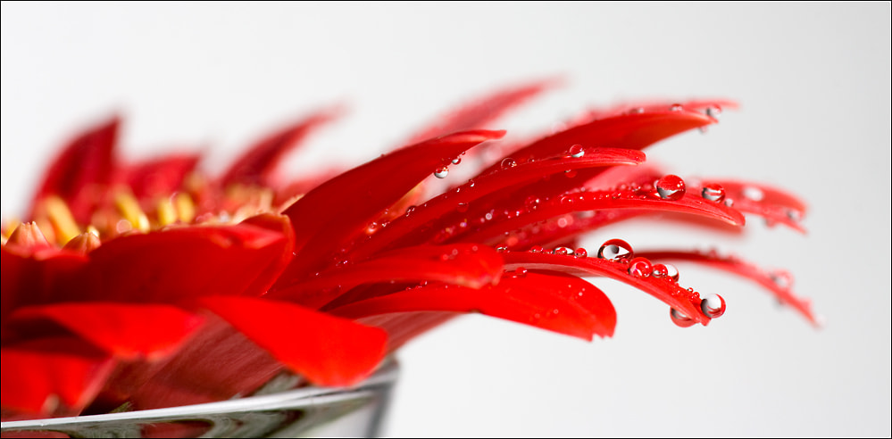 Photograph Red Drops by Simon Kurz on 500px