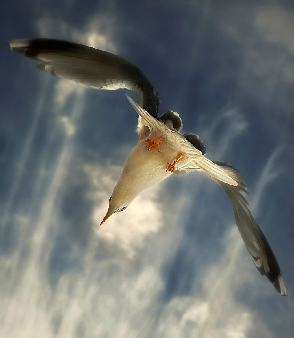 Photograph Jonathan Livingston by Geir Andersen on 500px