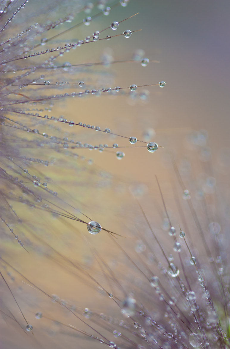 Photograph Pearls by Teuni Stevense on 500px