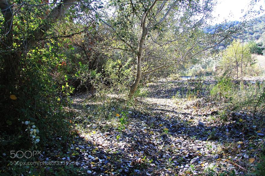 Cauce del Arroyo, en grandes crecidas.