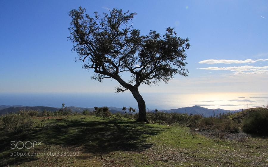 Desde este punto se divisa casi toda la provincia de Málaga.
