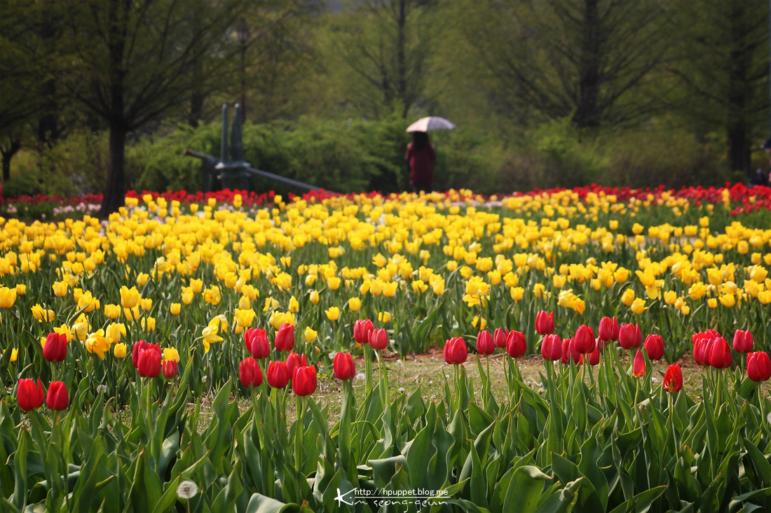 Photograph a walk in the park by kim seong-geun on 500px