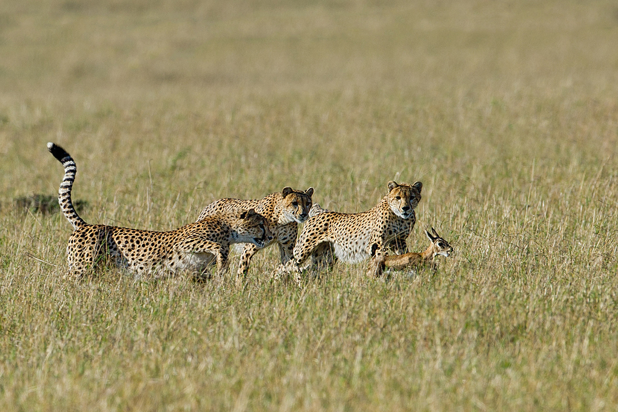 Photograph The lesson (2) by Marc MOL on 500px