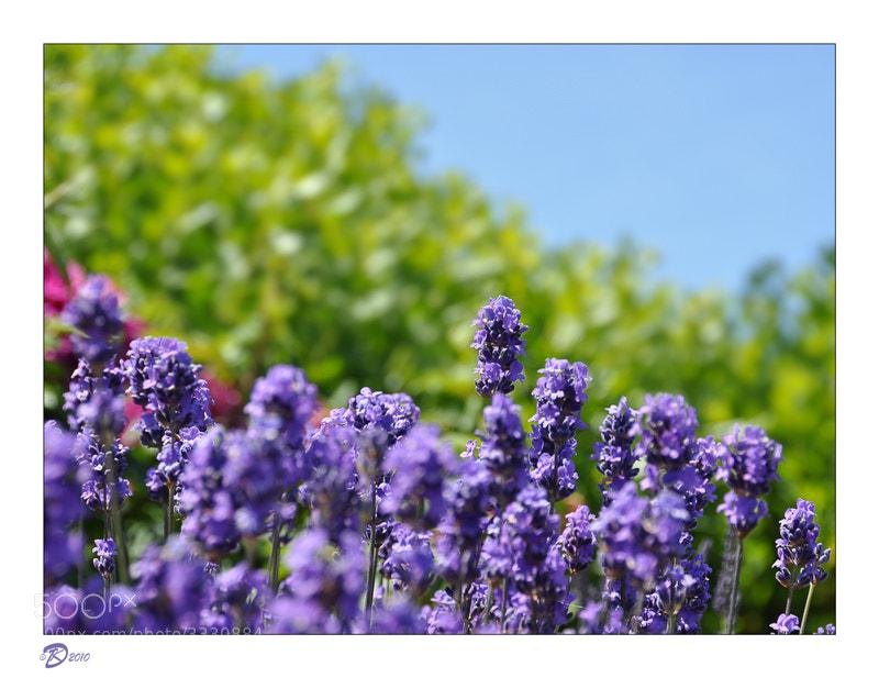 Photograph фиолет-зелен-голуб by no_gravity * on 500px