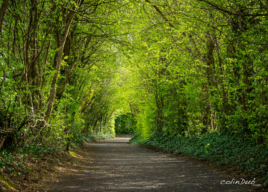 Photograph Irish Road by Colin Wojno on 500px