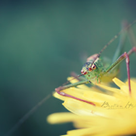 Saute'relle by Bastien HAJDUK (Troudd)) on 500px.com