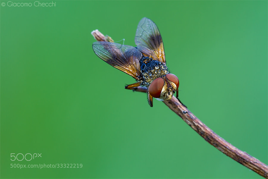Photograph Colored Fly by Giacomo Checchi on 500px