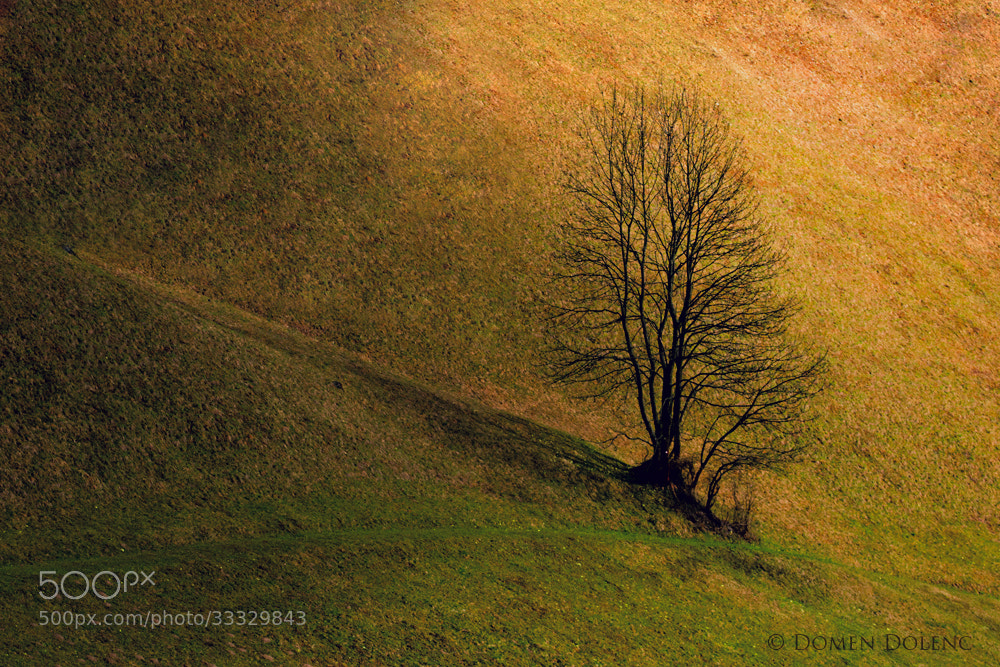 Photograph Tree by Domen  Dolenc on 500px
