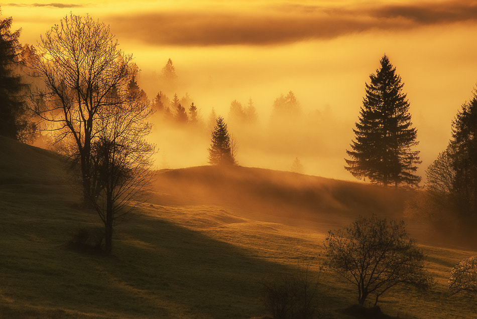 Photograph into the light by Marek Wilczura on 500px