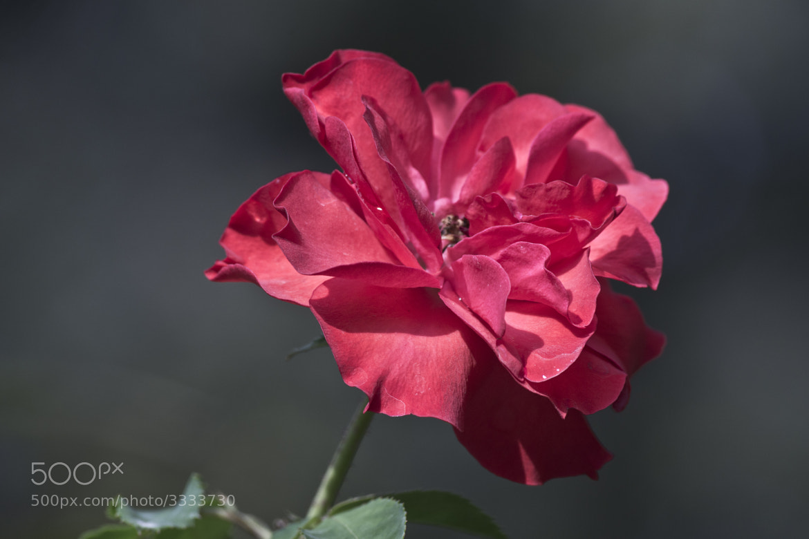 Photograph gorgeous red by nahuel baz andrade on 500px