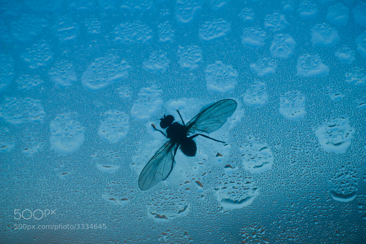 Photograph Fly in Condensing by Andrea Gherardi on 500px