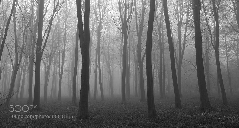 Photograph Morning Mist by Daniel Hannabuss on 500px