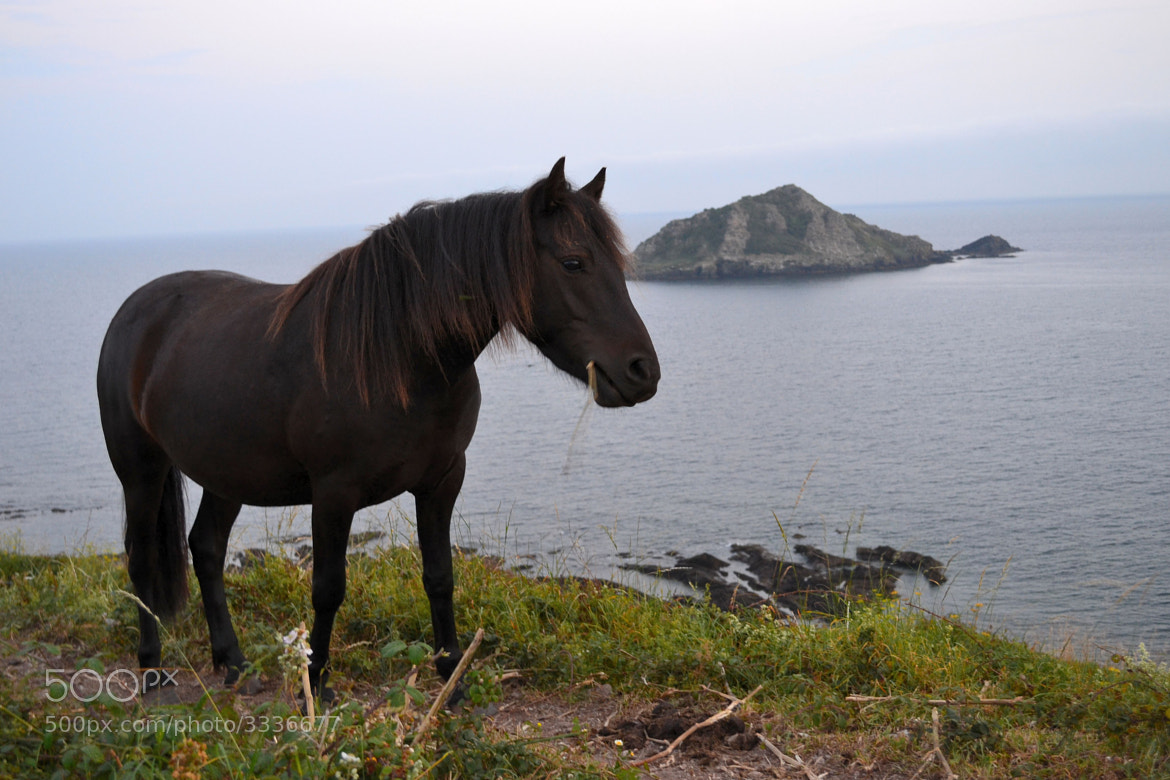 Photograph Coastal Pony by Emily N on 500px