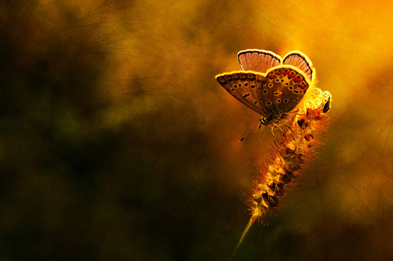 Photograph butterfly by Levente Illés on 500px
