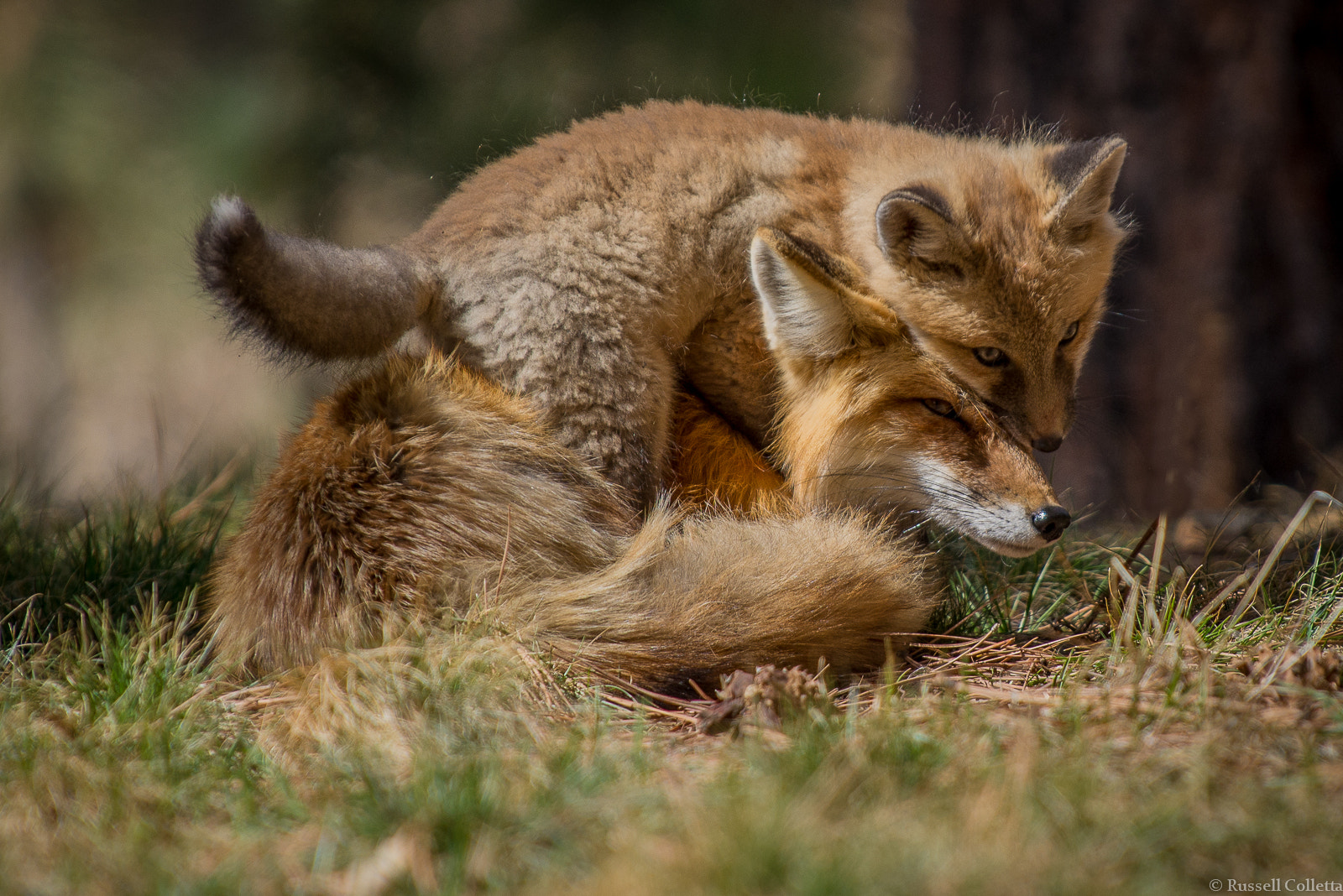 Photograph Affection by Russ Colletta on 500px