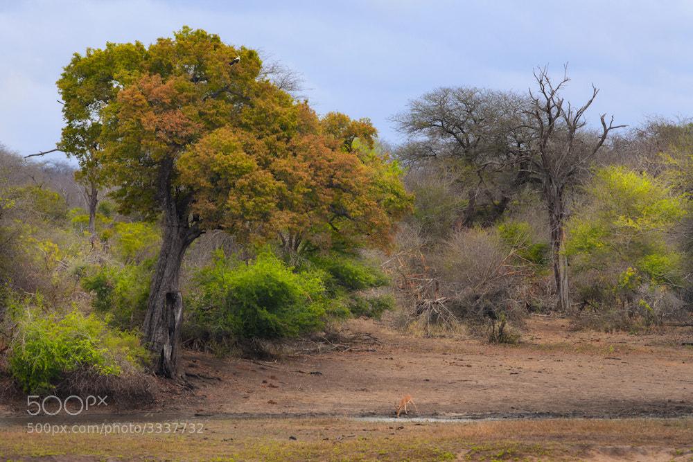 Photograph Nsemani by Mario Moreno on 500px