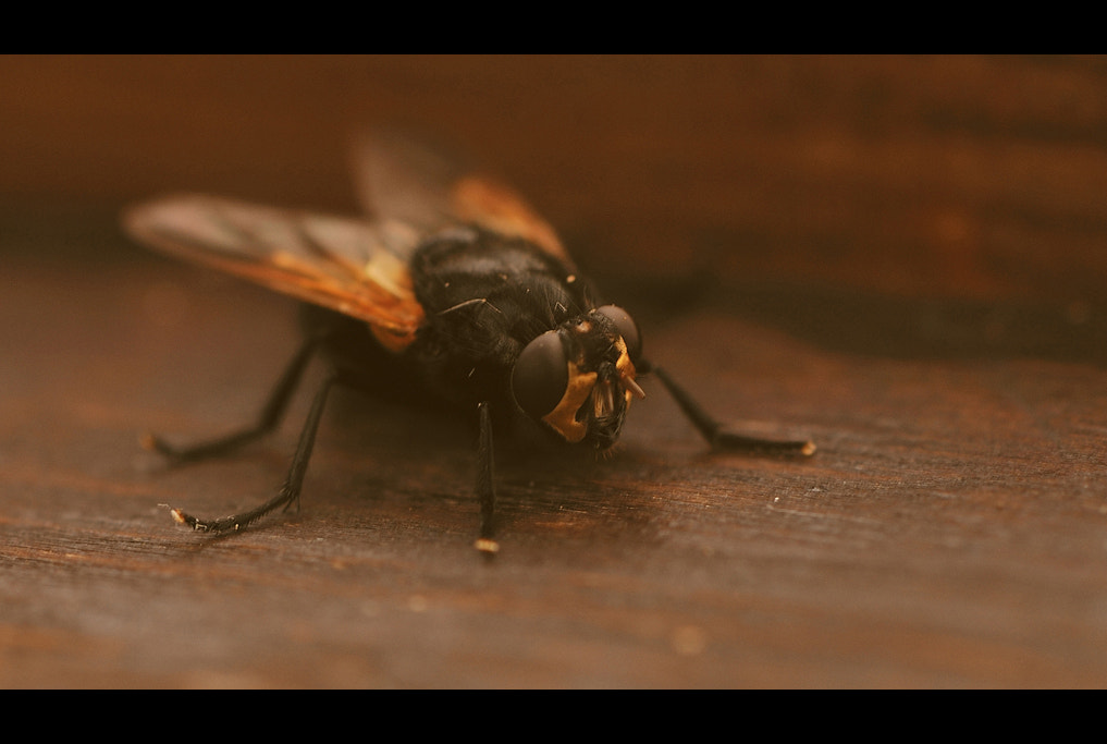 Photograph The fly... by Almqvist Photo on 500px