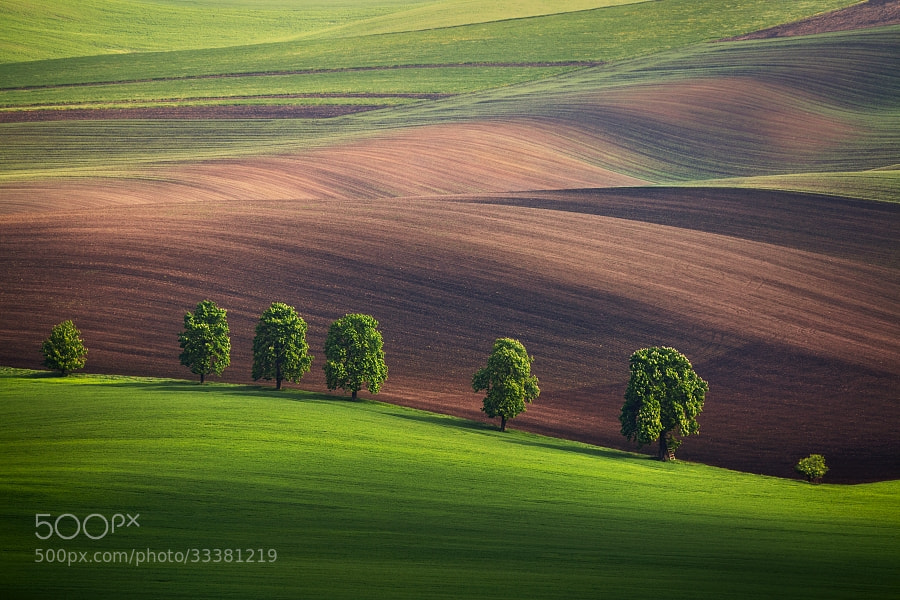 Photograph South Moravia by Daniel Řeřicha on 500px
