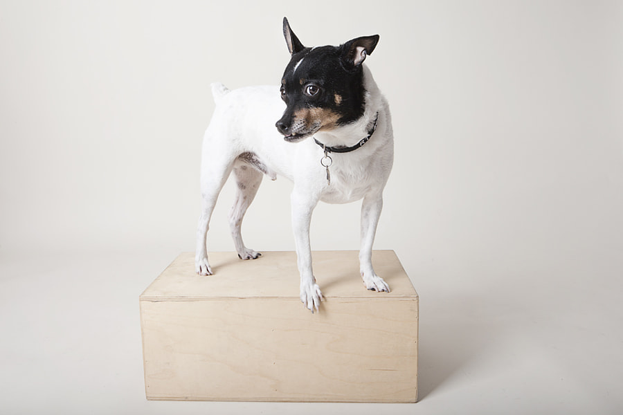 After almost 5 years, T is finally started to like modeling for me.