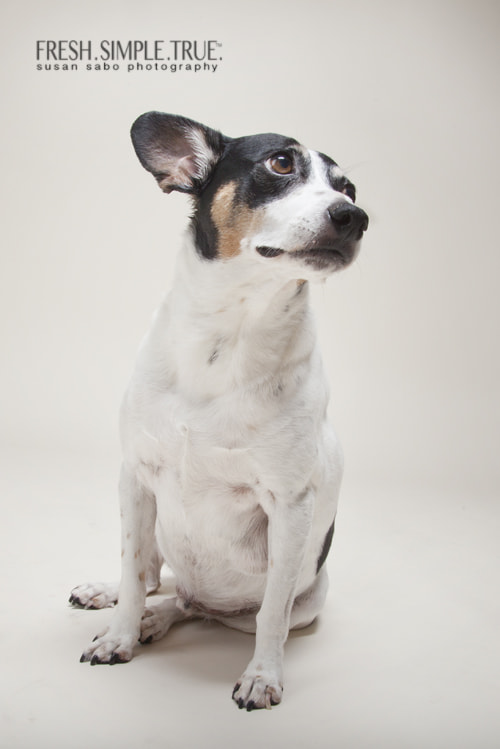 Jack, one of my rescues, deep in thought.