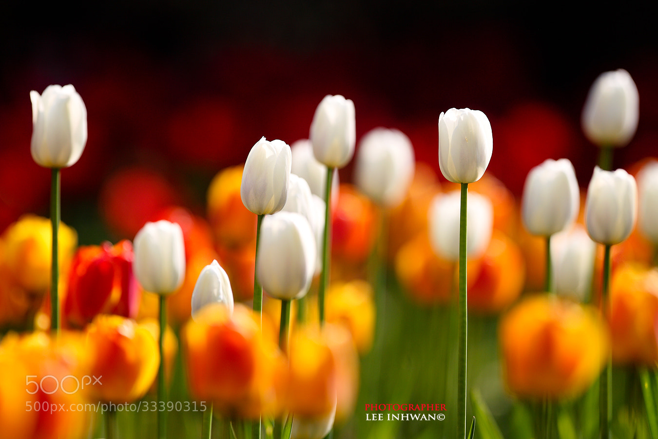Photograph Harmony of color by LEE INHWAN on 500px