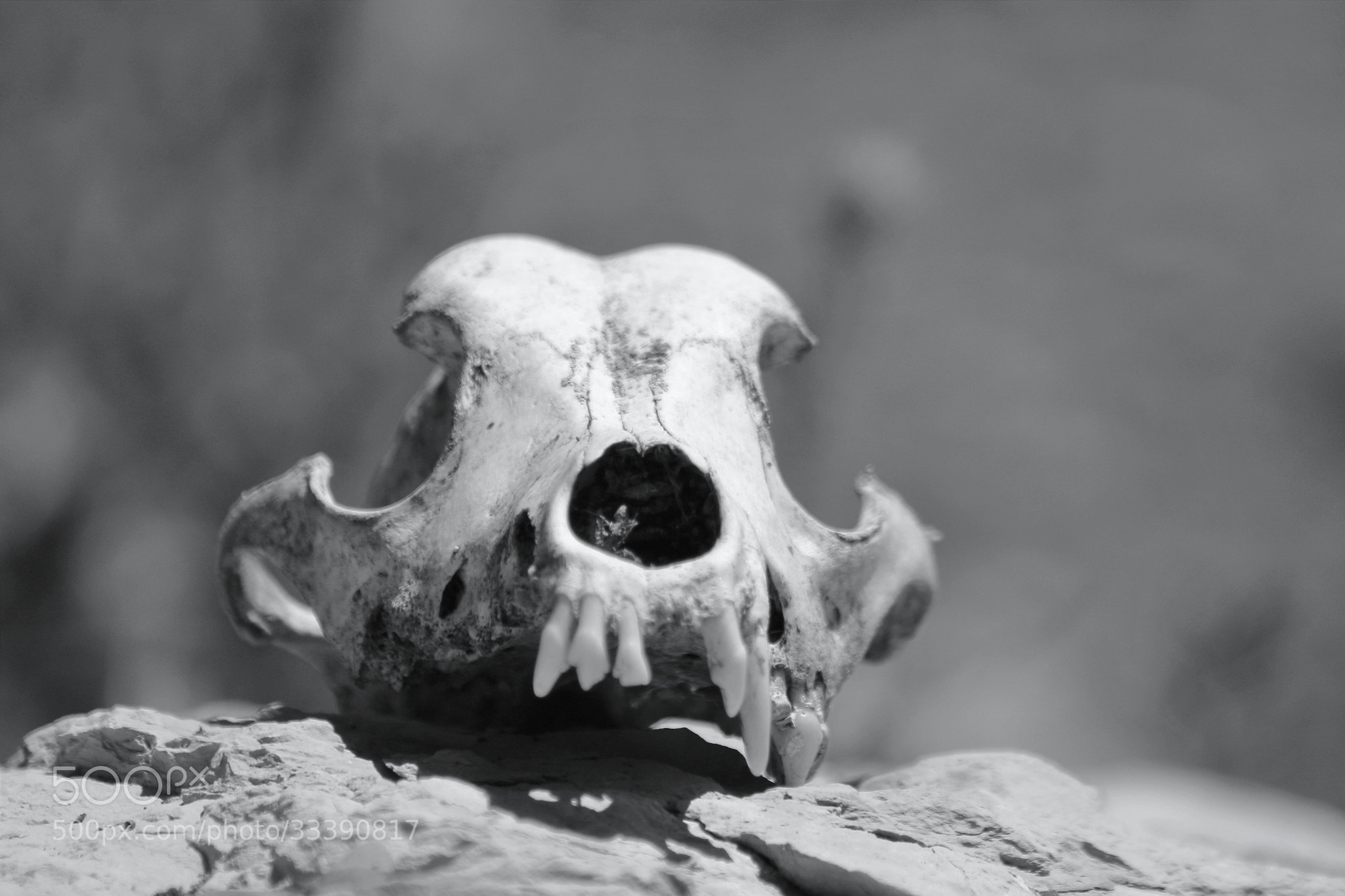 Photograph Skull of death by richard cauchy on 500px