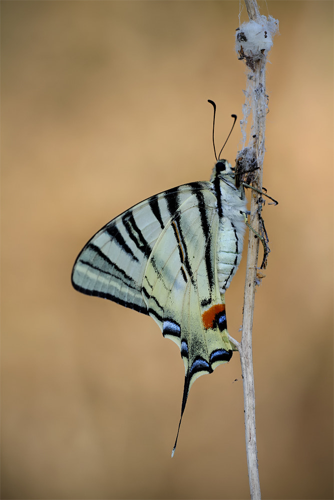 Photograph the butterfly more beautiful by ivo pandoli on 500px