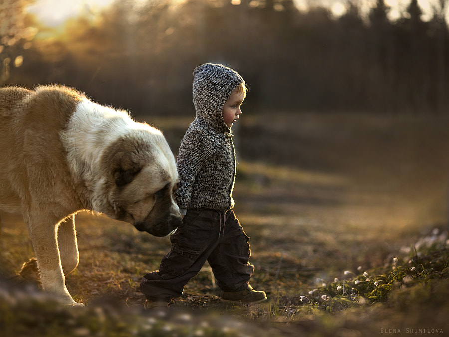 Photograph followed... by Elena Shumilova on 500px