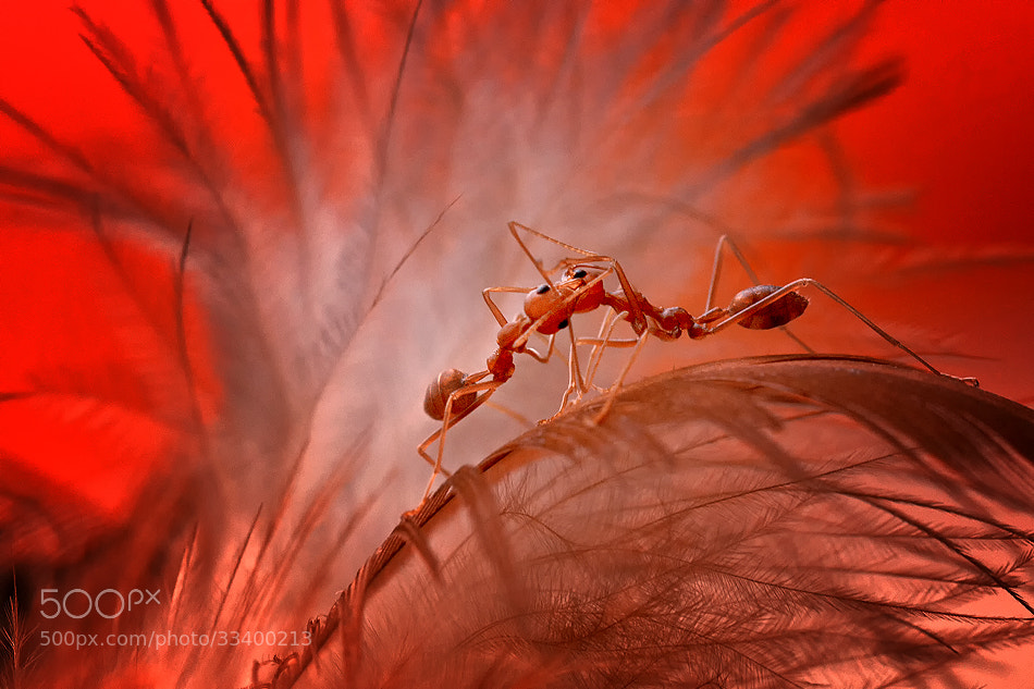 Photograph The final fight by Heri Wijaya on 500px