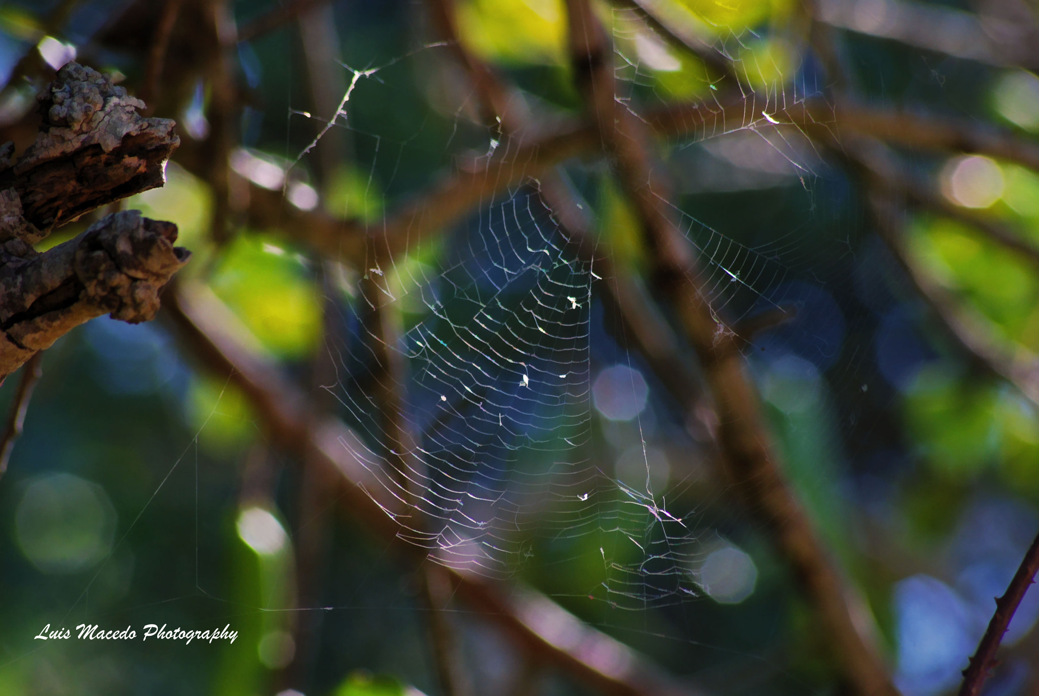 Photograph The Old Web by Luis Pereira on 500px