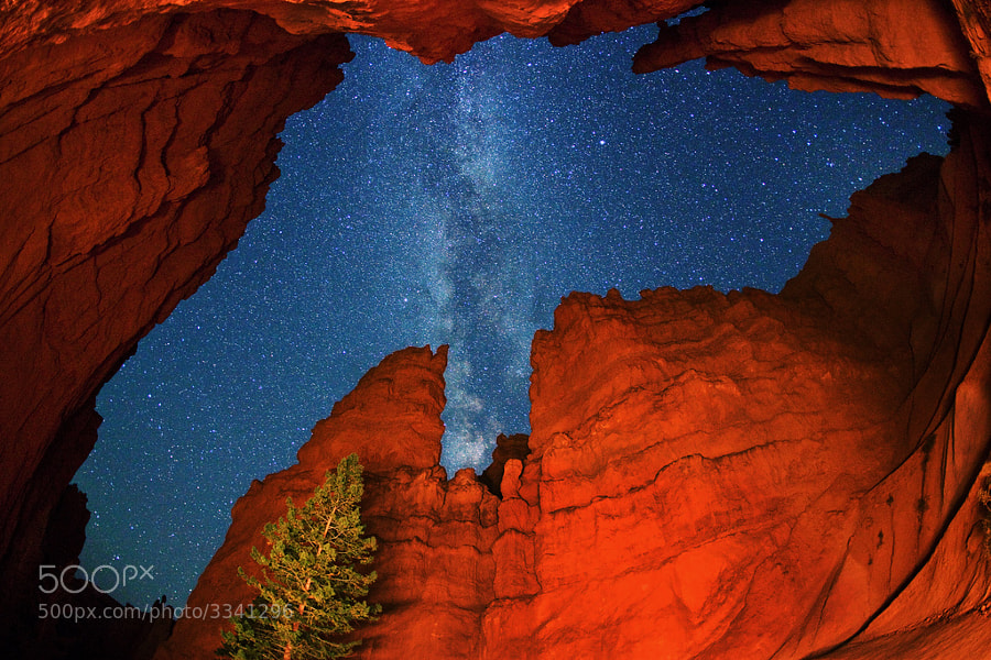 """Milky Way star canopy over the narrow 'Wall Street' canyon in Bryce Canyon National Park. Light painting at night shows orange and red rock formations which rise about 700 feet above this popular hiking trail on the 'Navajo Loop'. I planned this shot for several days, so that the Milky Way would be visible in this part of the canyon, and align with the notch in the wall at this time of night. Note ''The Sentinel'' near the top right of the photo. This extremely wide angle photo, looking virtually straight up, was taken with an LF 15mm f2.8 Fisheye lens (180-degree view diagonally) on the full-frame Canon EOS 5D Mark II. Light painting for 6 seconds w/ 2-million candle power reflected halogen.  Virtually all my NightScapes are ONE exposure (less than 30 seconds), and with very little Photoshop correction. For more how-to and behind the scenes information, visit my <a href=""""http://intothenightphoto.blogspot.com/"""">Into The Night Photography</a> blog. For Milky Way photography workshops, visit my <a href=""""http://intothenightphoto.blogspot.com/2013/11/royce-bairs-2014-photography-workshop.html"""">NightScape Events</a> page. You can <a href=""""http://roycebair.smugmug.com/Personal-Work/Nightscapes/"""">order PRINTS here</a>."""