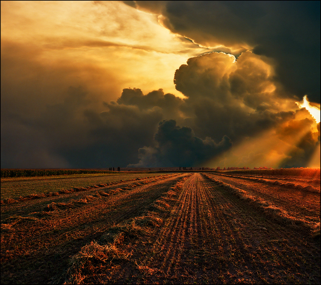 Photograph End of a summer day by Katarina Stefanović on 500px