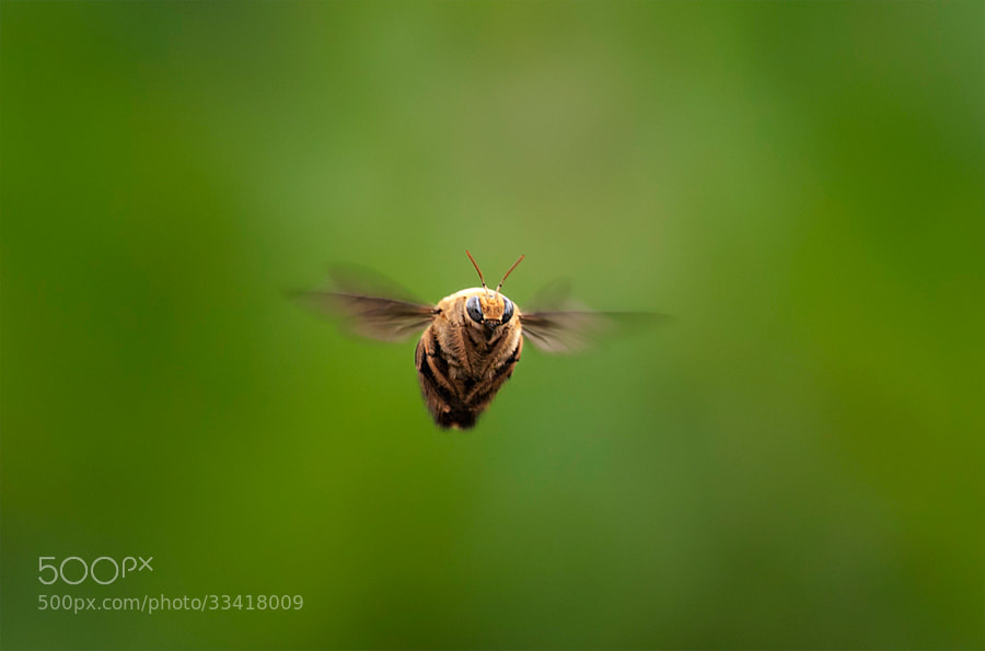 Photograph Fly by Beni Arisandi on 500px