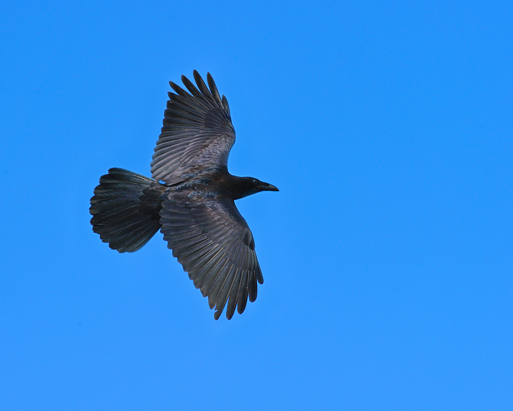 Photograph Raven by Tony Beck on 500px