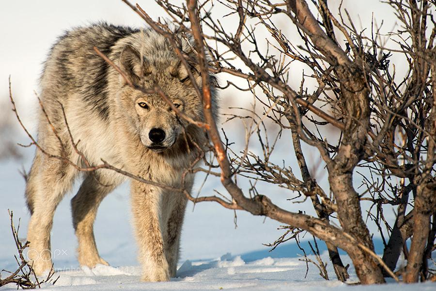Photograph in ambush by Ivan Kislov on 500px