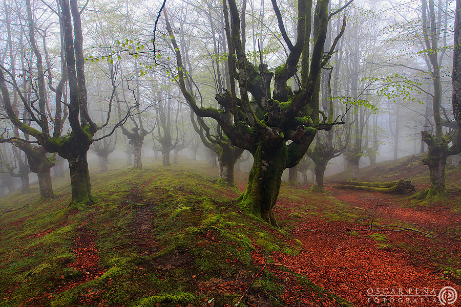 Photograph - Thirty three trees - by Oscar  Peña on 500px