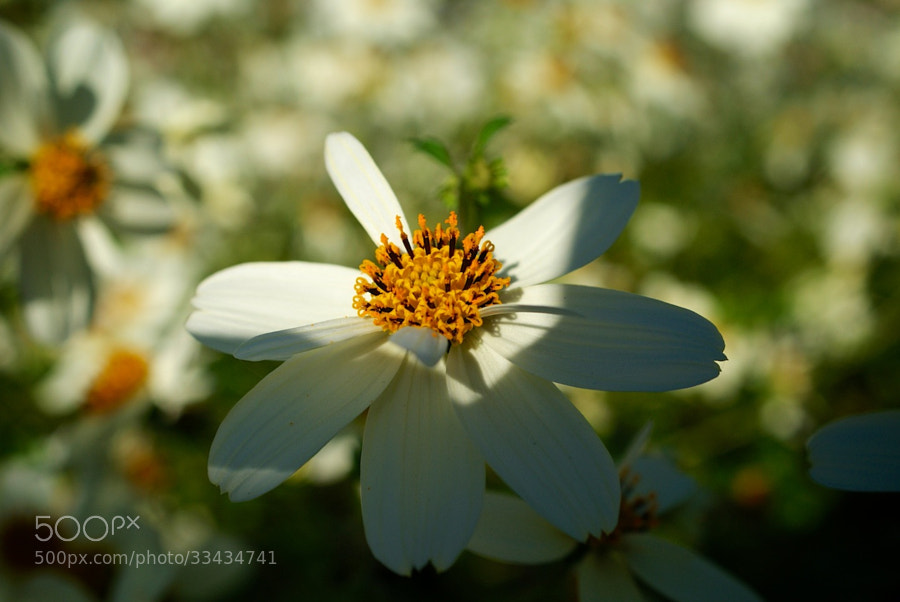 Flower 10 by wenmusic * (wenmusic)) on 500px.com
