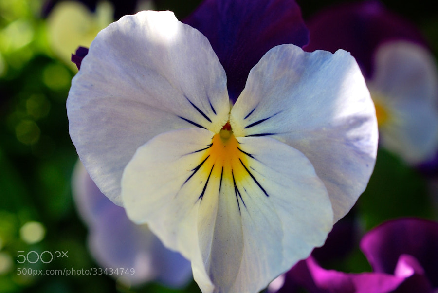 Flower 01 by wenmusic * (wenmusic)) on 500px.com