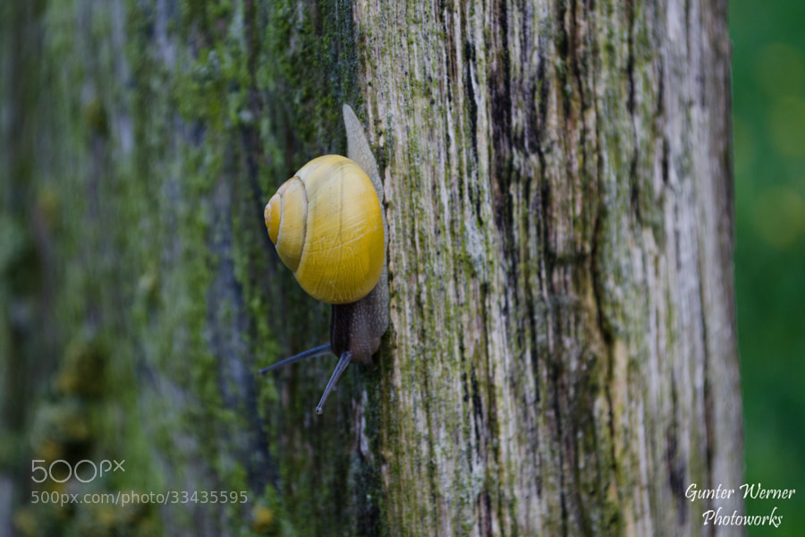 Photograph snail on wood by Gunter Werner on 500px