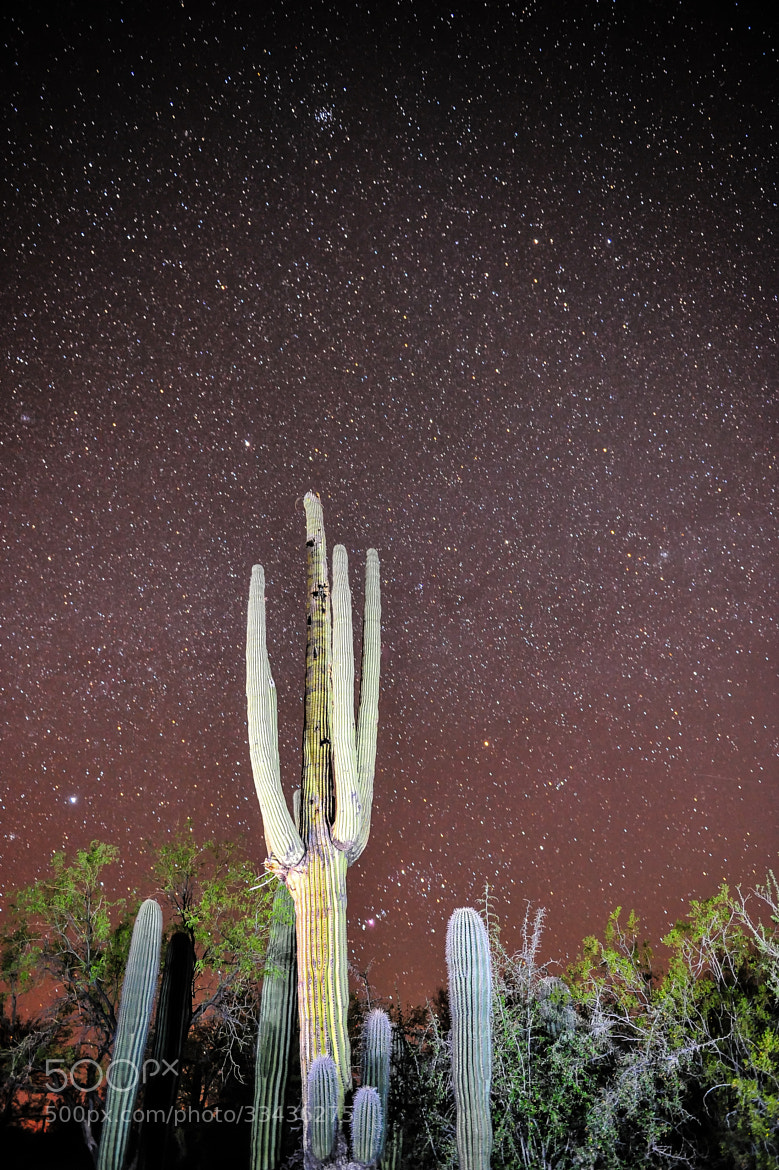 Photograph Tucson Starry Night by Chris Galando on 500px