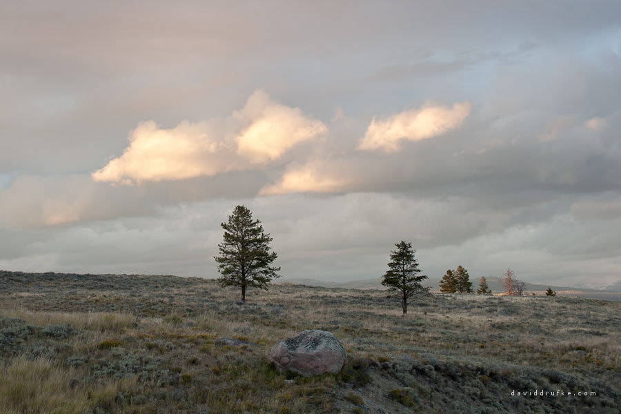 Photograph Trees and Clouds, YNP by David Drufke on 500px