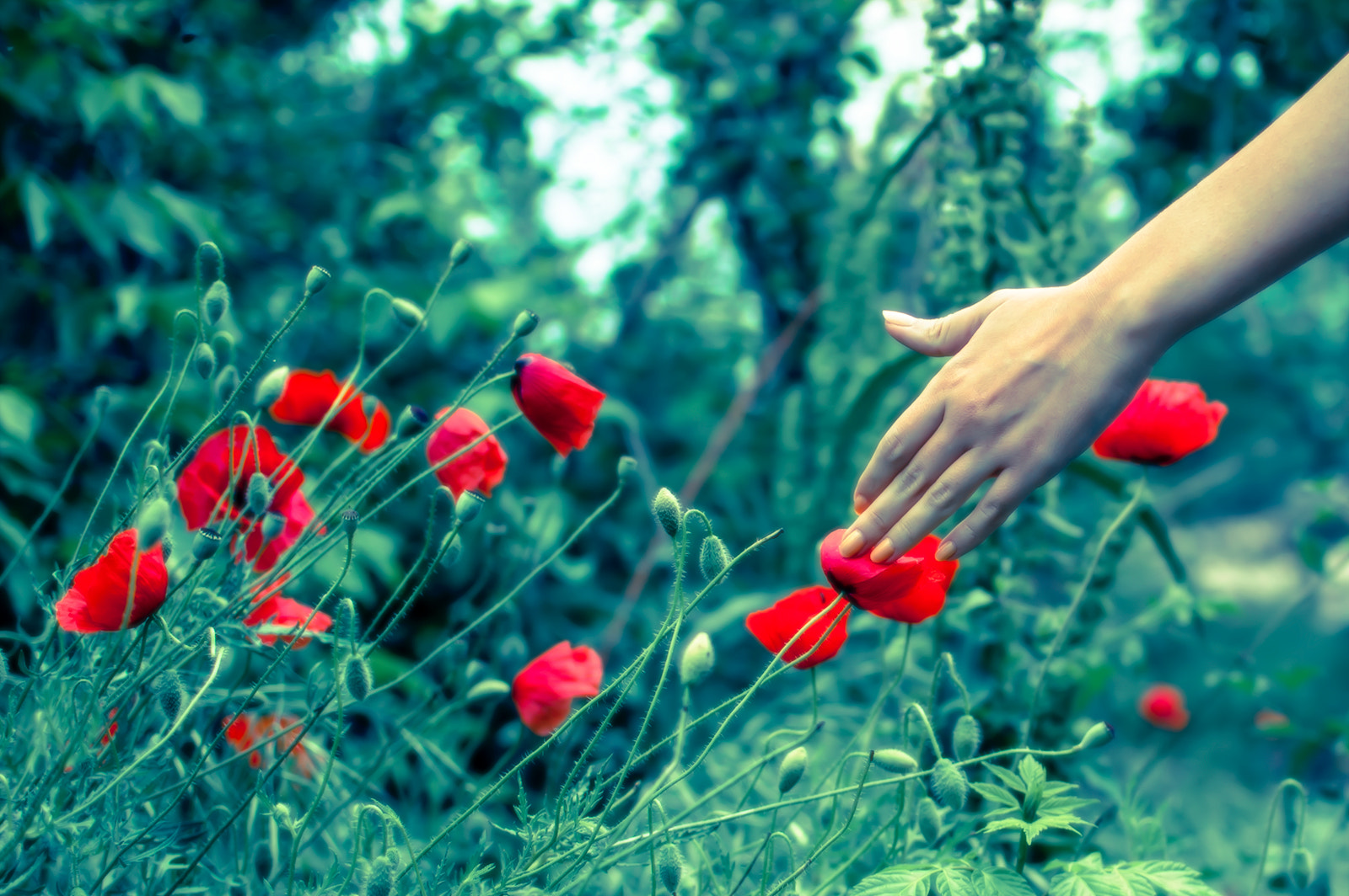 Photograph Touch by Yane Naumoski on 500px