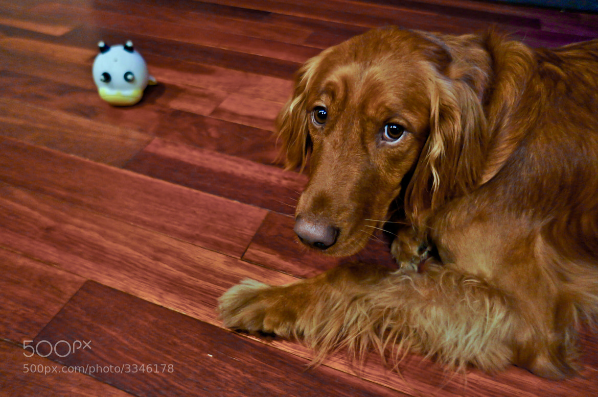 Photograph Peyton and Squeaky by Ray Thomas on 500px