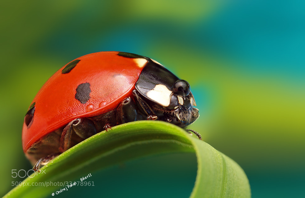 Photograph In the top by Ondrej Pakan on 500px