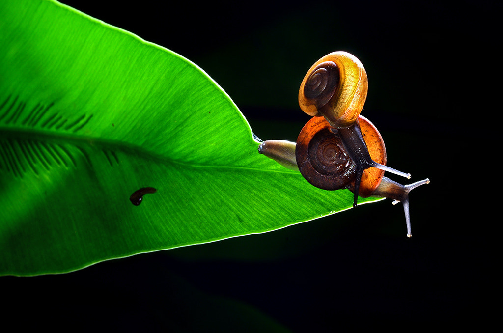 Photograph Snail in Love 2 by Tetra on 500px