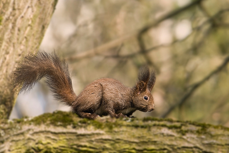 Photograph squirrel by Hunter 2000 on 500px