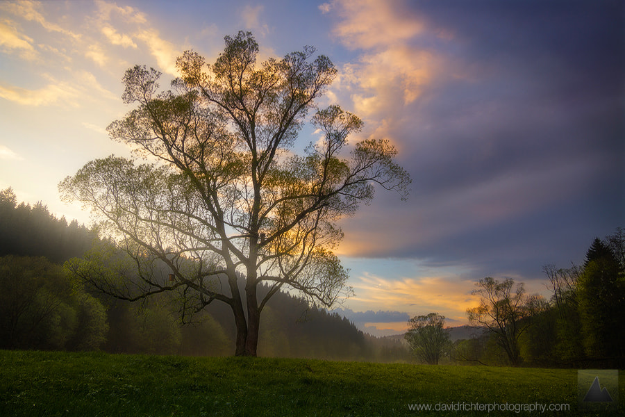 Photograph Emergence by David Richter on 500px