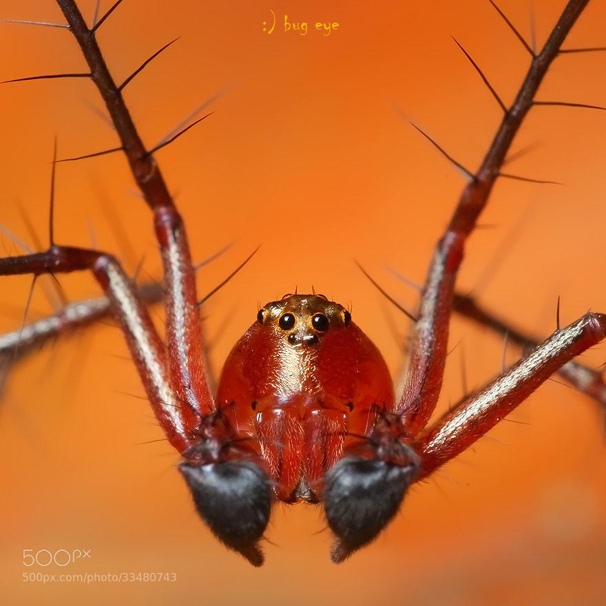 Photograph 'oo' by bug eye :) on 500px