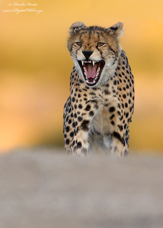Photograph Fierce by Hendri Venter on 500px