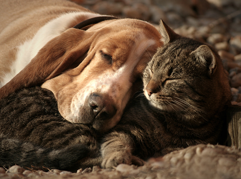 cat pillow-dog blanket by Szilvia Pap-Kutasi on 500px.com